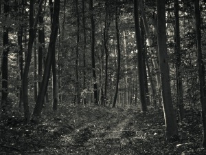 forest-1172278_960_720